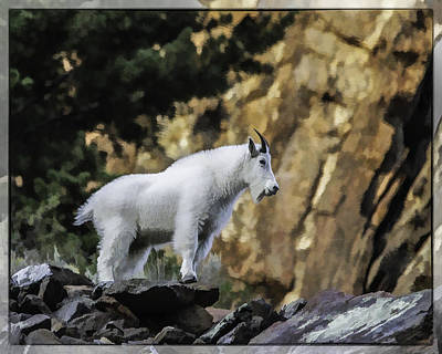 Photograph - King Of The Mountain by Elizabeth Eldridge