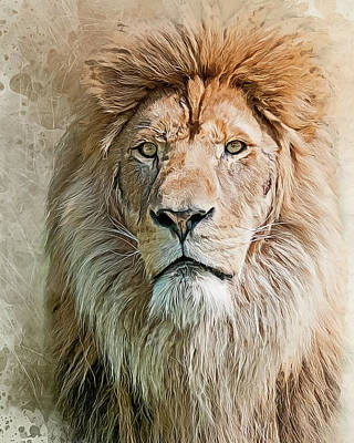 Photograph - King Of The Pride by Brian Tarr
