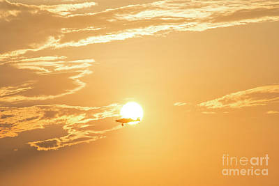 Photograph - King Of The Sky And Sun by David Arment