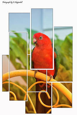 Digital Art - King Parrot 0658 by Kevin Chippindall