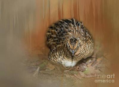 Photograph - King Quail by Eva Lechner