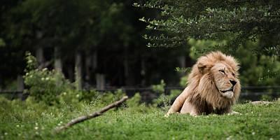 Photograph - King by Ryan Heffron