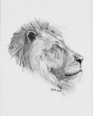 African Big Cats Drawing - King by Shawn Sanderson