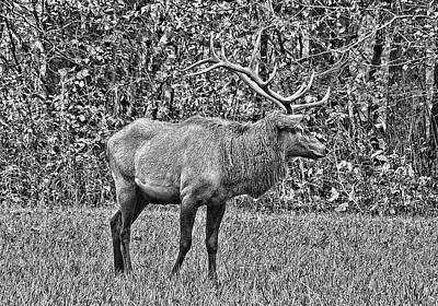 Photograph - King Stag In Black And White   by HH Photography of Florida