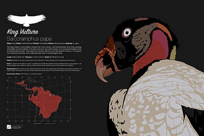 Digital Art - King Vulture Infographic by Marcus England