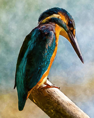 Kingfisher Digital Art - King by William Wooding