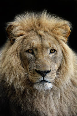 Lion Face Photograph - King Without A Crown by Joachim G Pinkawa