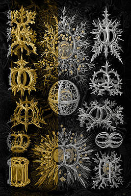 Digital Art - Kingdom Of Silver Single-celled Organisms  by Serge Averbukh