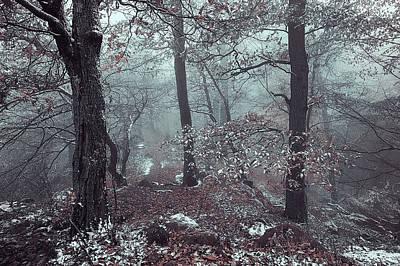 Photograph - Kingdom Of The Trees by Jenny Rainbow