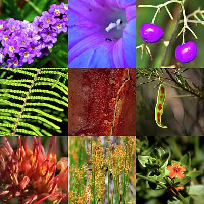 Photograph - Kingdom Plantae by Miroslava Jurcik