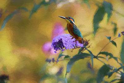 Photograph - Kingfisher And The Butterfly Bush by Ericamaxine Price