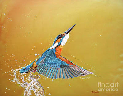 Painting - Kingfisher by Diane Marcotte