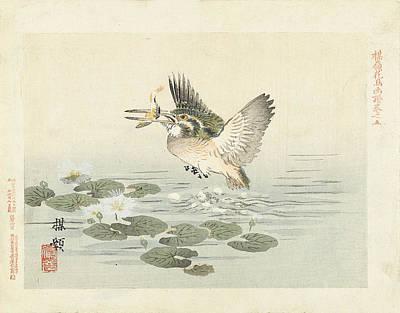 Kingfisher Drawing - Kingfisher by Kono Bairei