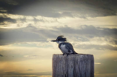 Photograph - Kingfisher At Sunrise by Marilyn Wilson