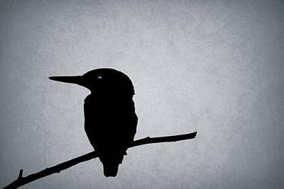 Kingfisher Photograph - Kingfisher by Mark Rogan
