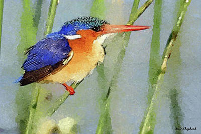 Kingfisher Digital Art -  Kingfisher by MS  Fineart Creations