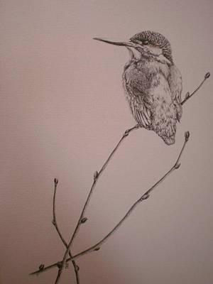 Kingfisher Drawing - Kingfisher by Nikki McIvor