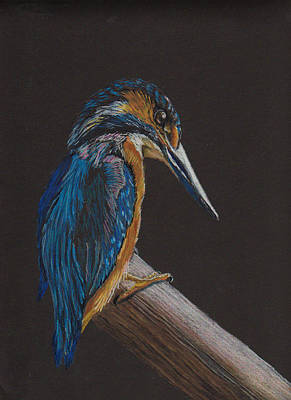 Kingfisher On A Pole Art Print
