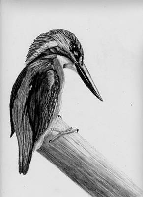 Kingfisher Drawing - Kingfisher On Pole by Jay Johnston