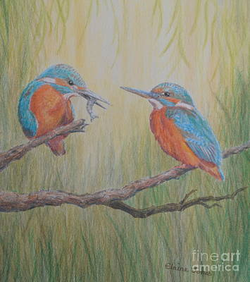 Kingfisher Drawing - Kingfisher Pair by Elaine Jones