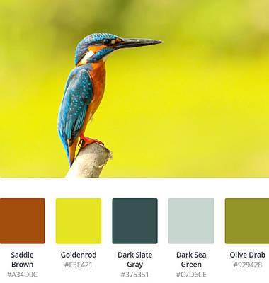 Digital Art - Kingfisher Palette Decor by Jennifer Baulch
