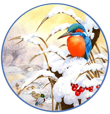 Kingfisher Painting - Kingfisher Plate by John Francis