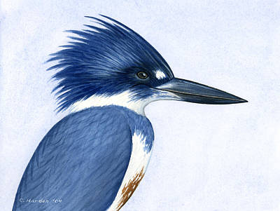 Kingfisher Painting - Kingfisher Portrait by Charles Harden