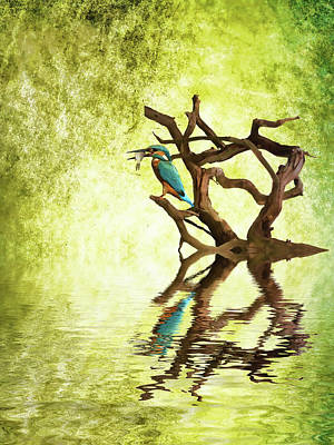 Kingfisher Mixed Media - Kingfisher Supper by Sharon Lisa Clarke