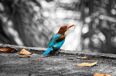 Photograph - Kingfisher by Venura Herath