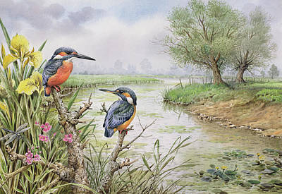 Kingfisher Drawing - Kingfishers On The Riverbank by Carl Donner