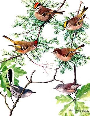 Mixed Media - Kinglet And Gnatcatcher Birds by Rose Santuci-Sofranko