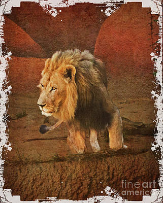 Photograph - King_of_thejungle by Scott Parker