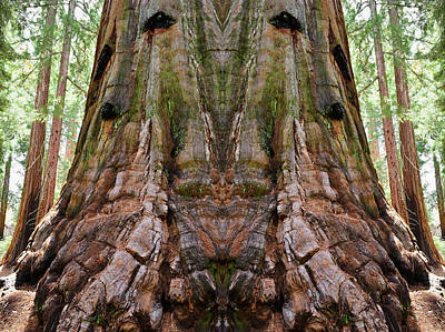 Photograph - Kings Canyon Giant Sequoia Mirror by Kyle Hanson