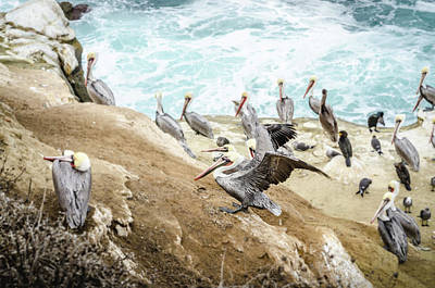 Photograph - Kings Of The Beach by Margaret Pitcher