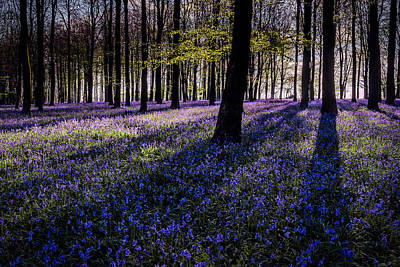 Kent Photograph - Kings Wood Bluebells by Ian Hufton