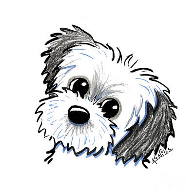 Drawing - Kiniart Shih Tzu Cutie by Kim Niles