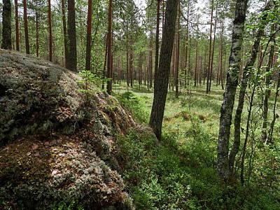 Photograph - Kintulammi Forest by Jouko Lehto