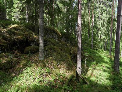 Photograph - Kintulammi Forests by Jouko Lehto