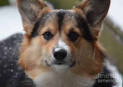 Photograph - Kipper In The Snow by Maria Urso