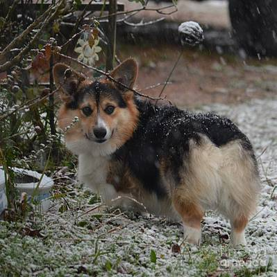 Photograph - Kipper's First Snow by Maria Urso