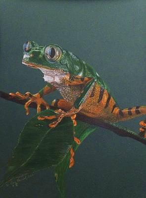 Rain Forest Animals Drawing - Kirmit by Dan Hausel