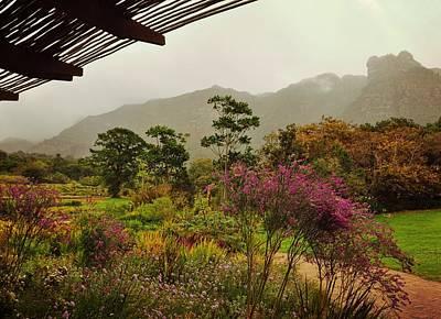 Photograph - Kirstenbosch Forest by JAMART Photography
