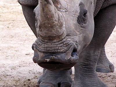 Photograph - Kiss A Rhino   by Chris Mercer