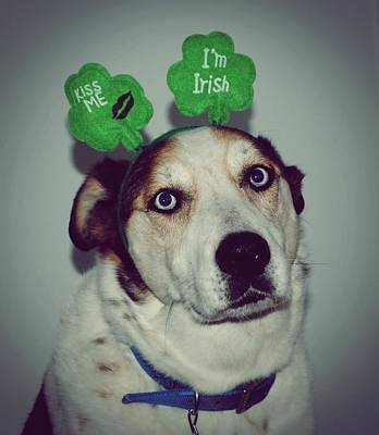 Dog Photograph - Kiss Me Im Irish Dog  Humane Society Wisconsin by Laura Pineda