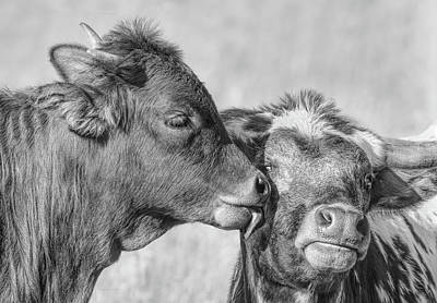 Photograph - Kiss Mom Texas Longhorn Calf Monochrome by Jennie Marie Schell