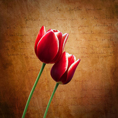Tulip Photograph - Kissed By The Light by Ian Barber