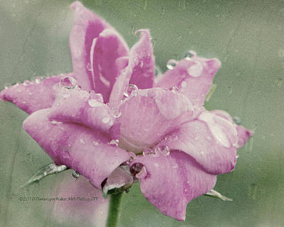 Photograph - Kissed By The Rain by Dianna Lynn Walker