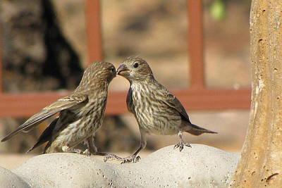 Photograph - Kissing Cousins by Marilyn Barton