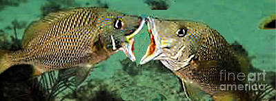 Photograph - Kissing Fish, Undersea Love by Merton Allen