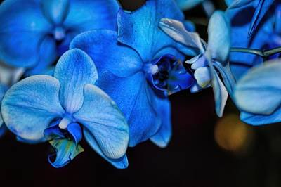 Photograph - Kissing In Blue by Diana Mary Sharpton